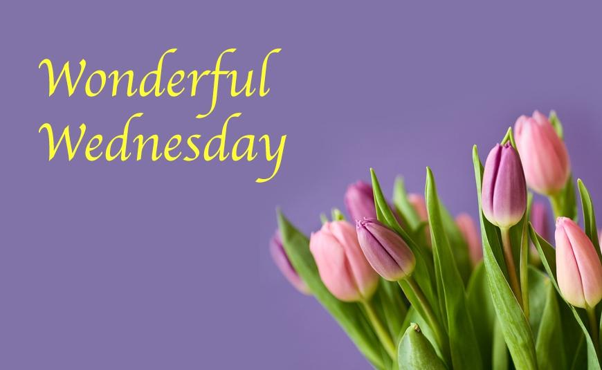 Wonderful Wednesdays Women's Bible Study